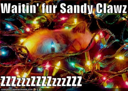 Kitteh sleeping in christmas tree and waiting for sandy claws